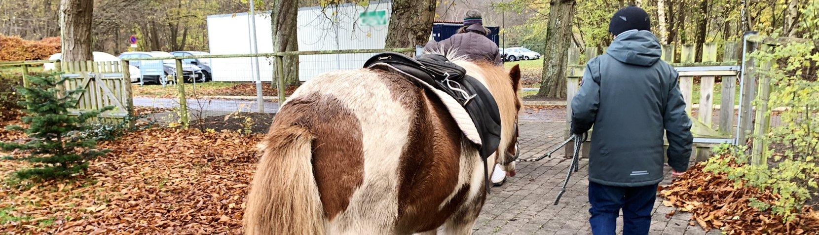 Rytteren går ved siden af den islandske hest