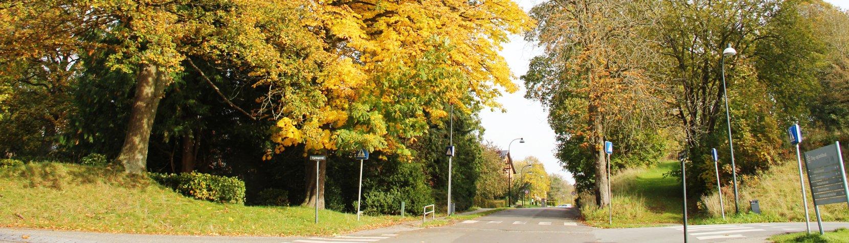 Sophie Magdelenes Vej fotograferet om efteråret