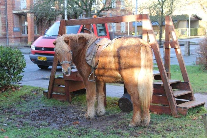 Den ene af Rideklubbens to islandske heste