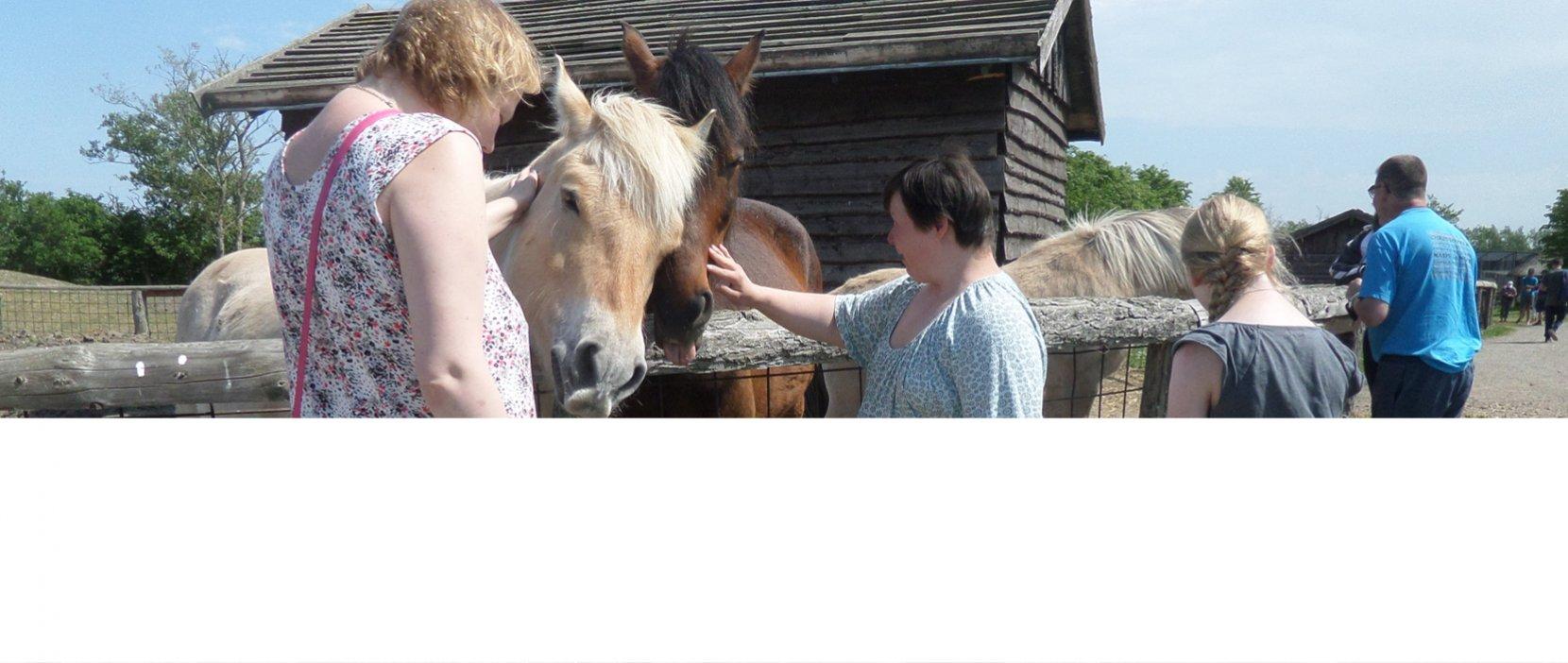 Der blev hilst på heste på en af vores hytteture