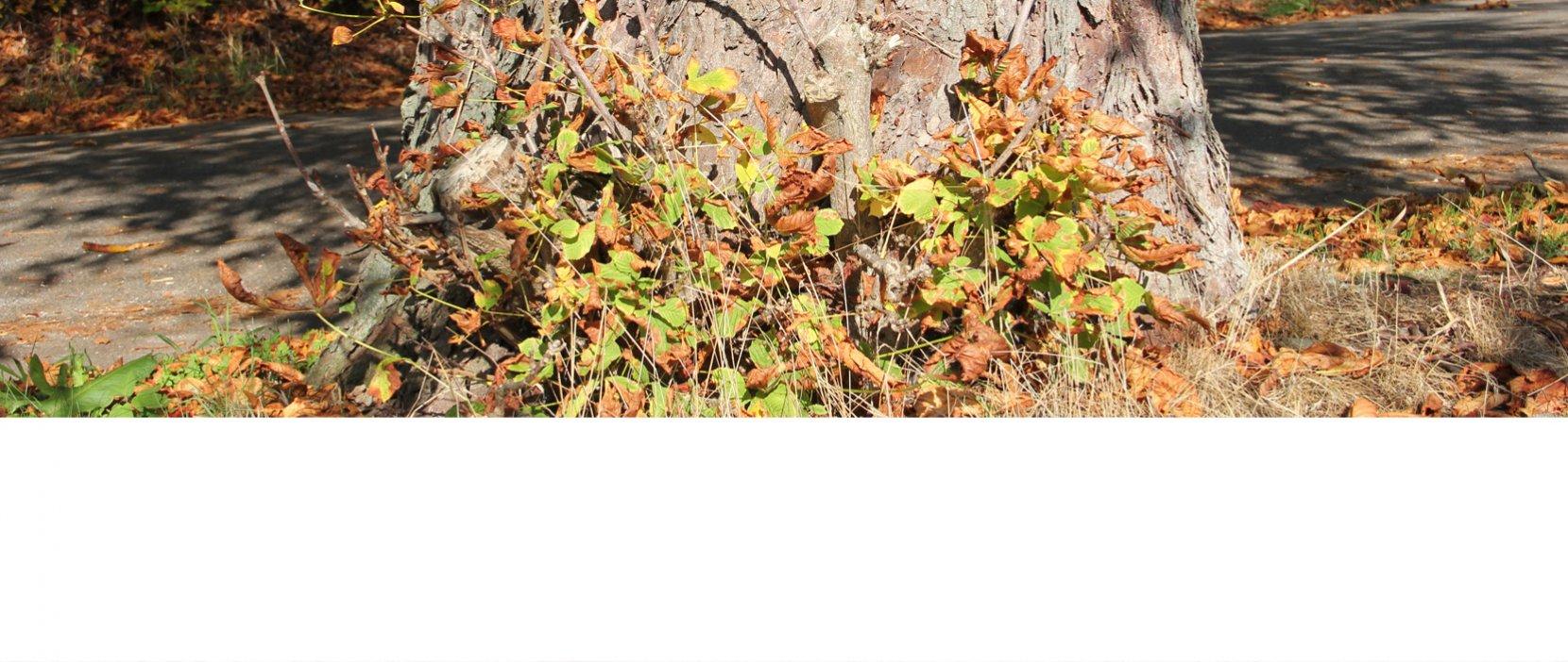 Træstub omgivet af grene med visne blade